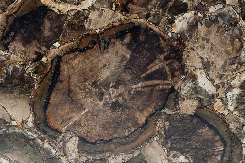 Полудрагоценный камень Перфилд Вуд Антик (Petrified Wood antik)